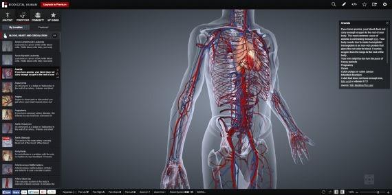 Biodigitalhuman_8_sh